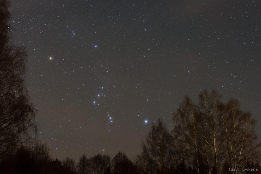 Orion sammub puulatvu mööda
